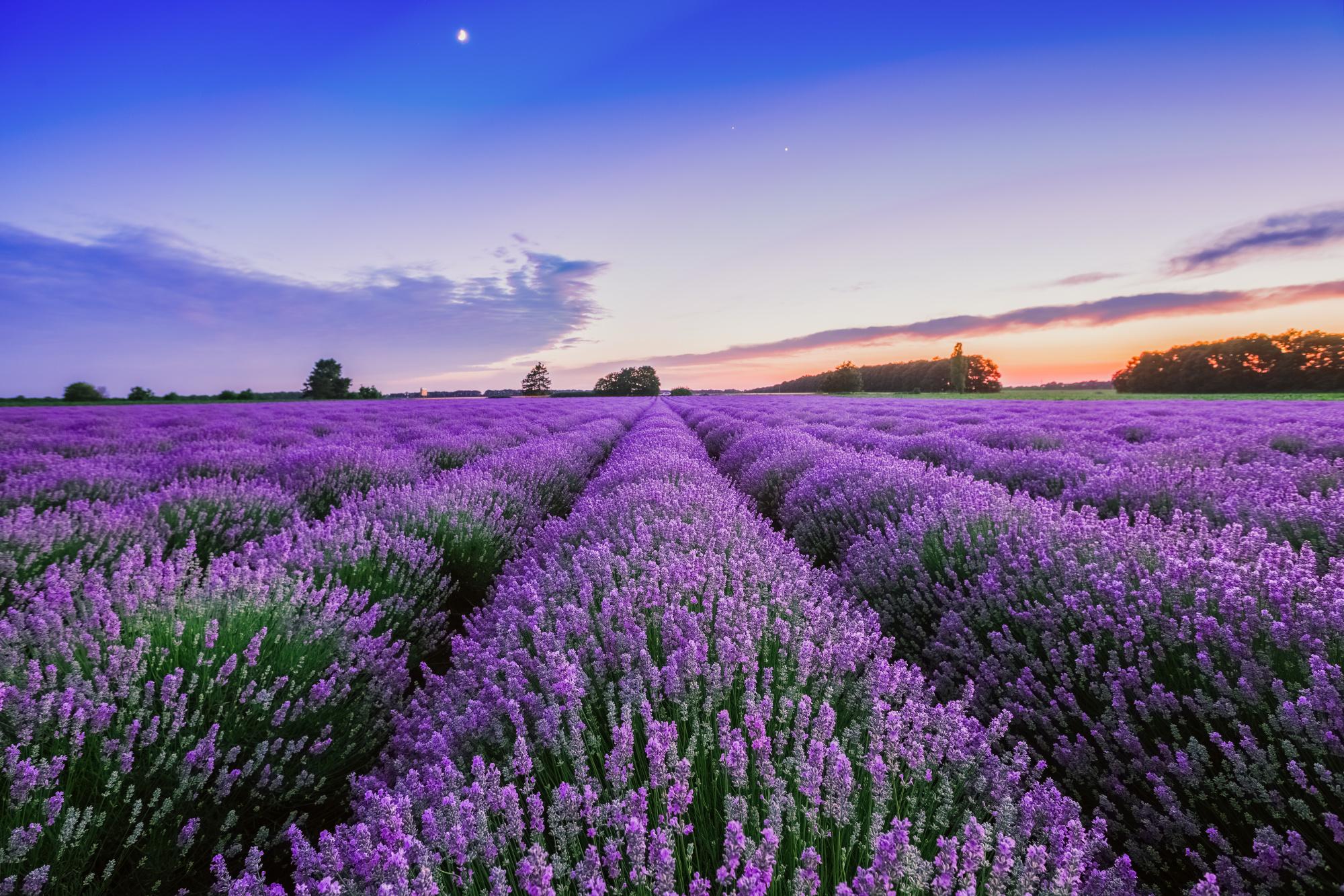9 природных ароматов для смены настроения