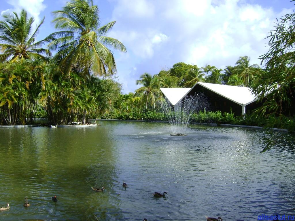 утки в Доминикане