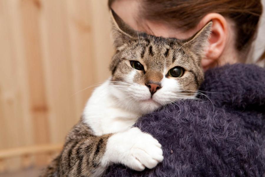 Кот вернулся к хозяйке после того, как ушел из дома 11 лет назад