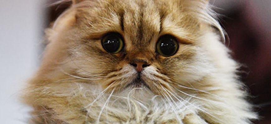 Эксперты рассказали, почему с кошками жить интереснее и веселее