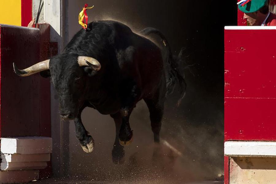 Испанских школьников заставили издеваться над быками