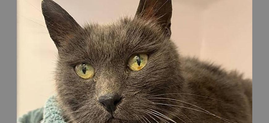 В Новой Зеландии кот вернулся домой после 5 лет отсутствия