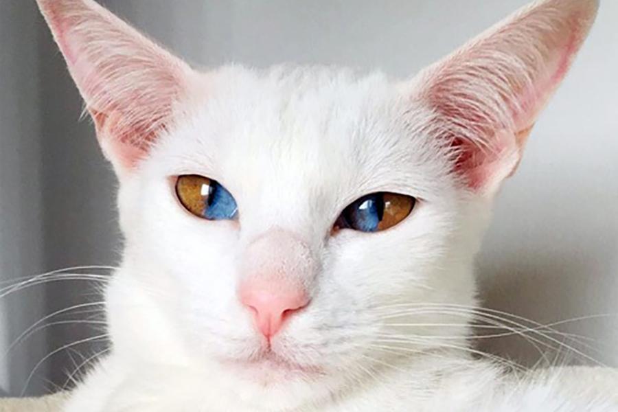 Кошка с потрясающими глазами удивляет всех своим взглядом