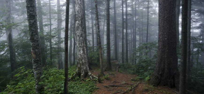 Парень рассказал как он смог выжить 6 дней в лесу, потерявшись на экскурсии