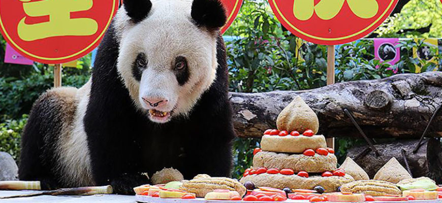 В китайском зоопарке отметили день рождения старейшей в мире панды