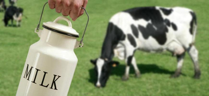 Американцы сшили футболки из коровьего молока