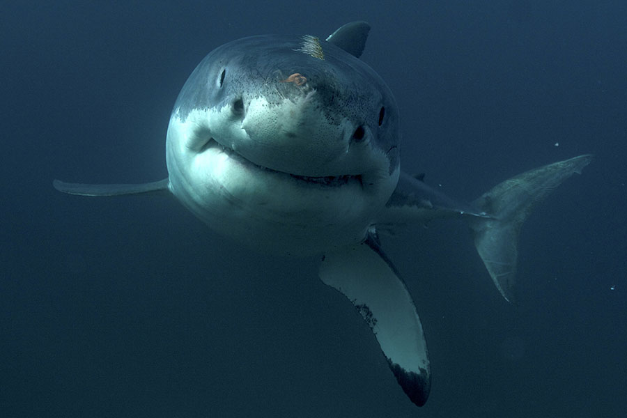 Собака напала на акулу и этим спасла своего хозяина