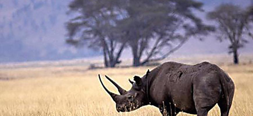 В ЮАР ветеринары пытаются спасти раненого редкого носорога