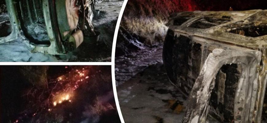 В США свалившийся на полицейский автомобиль медведь спровоцировал аварию с пожаром