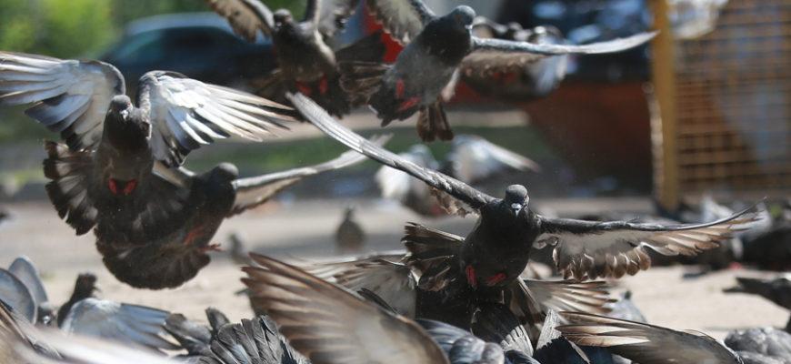 Квартира россиянки превратилась в ловушку смерти для птиц