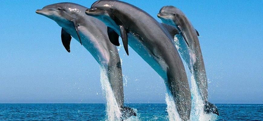 У берегов Тосканы массово гибнут голодные киты и дельфины