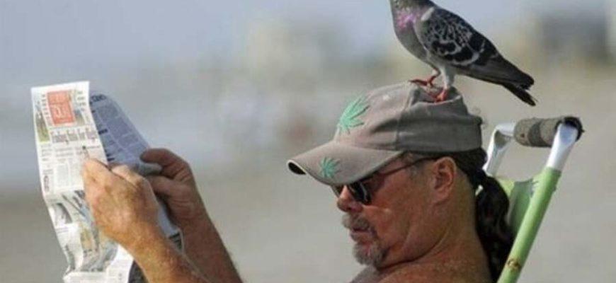 голуби и люди