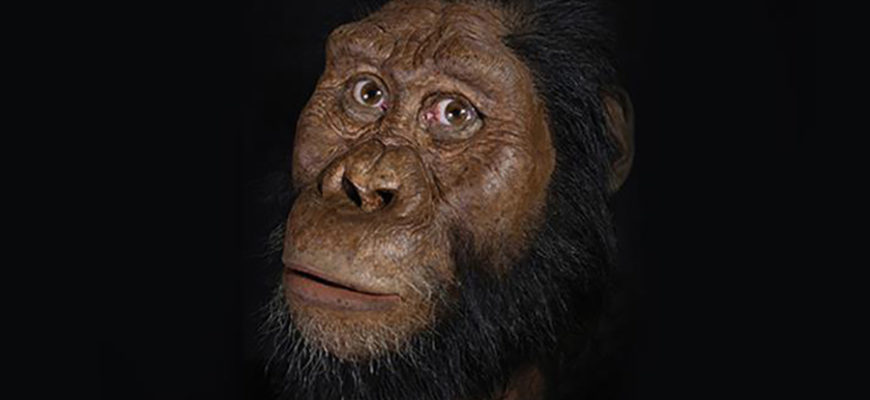 Ученые воссоздали лицо жившего 3,8 миллиона лет назад предка человека