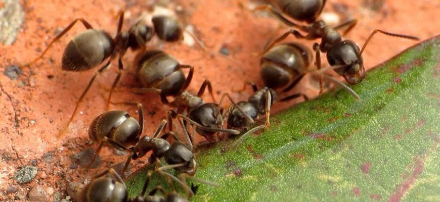 Дождевые облака в Англии оказались роем летающих муравьев