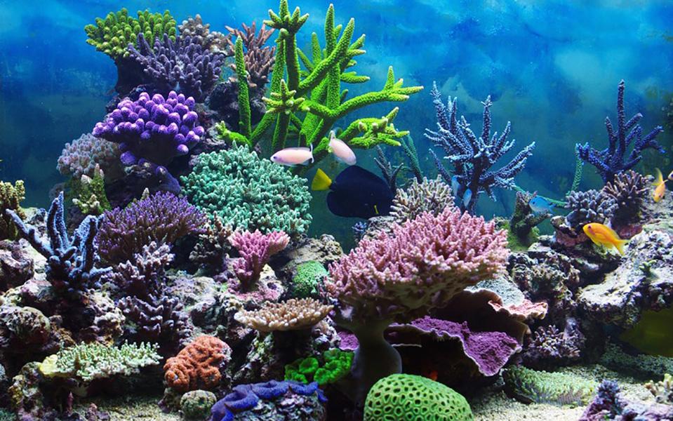В Великобритании супруги отравились смертельно опасным токсином во время чистки аквариума