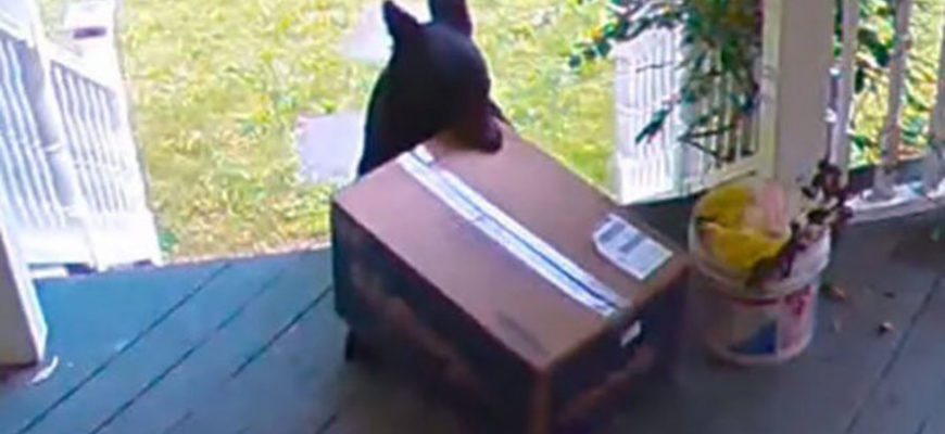 В США медведь украл посылку прямо с крыльца