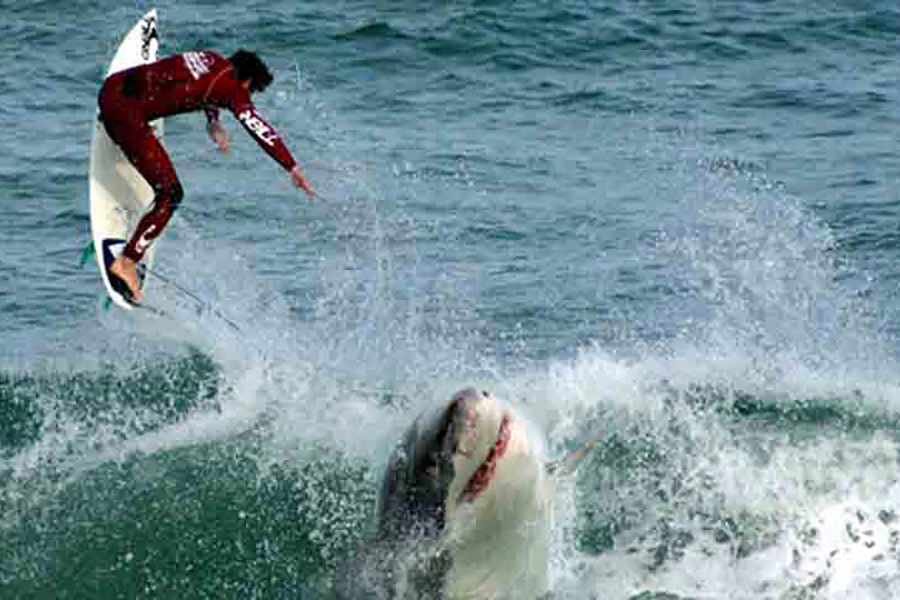 Мужчина катался на серфе и запрыгнул в пасть к акуле