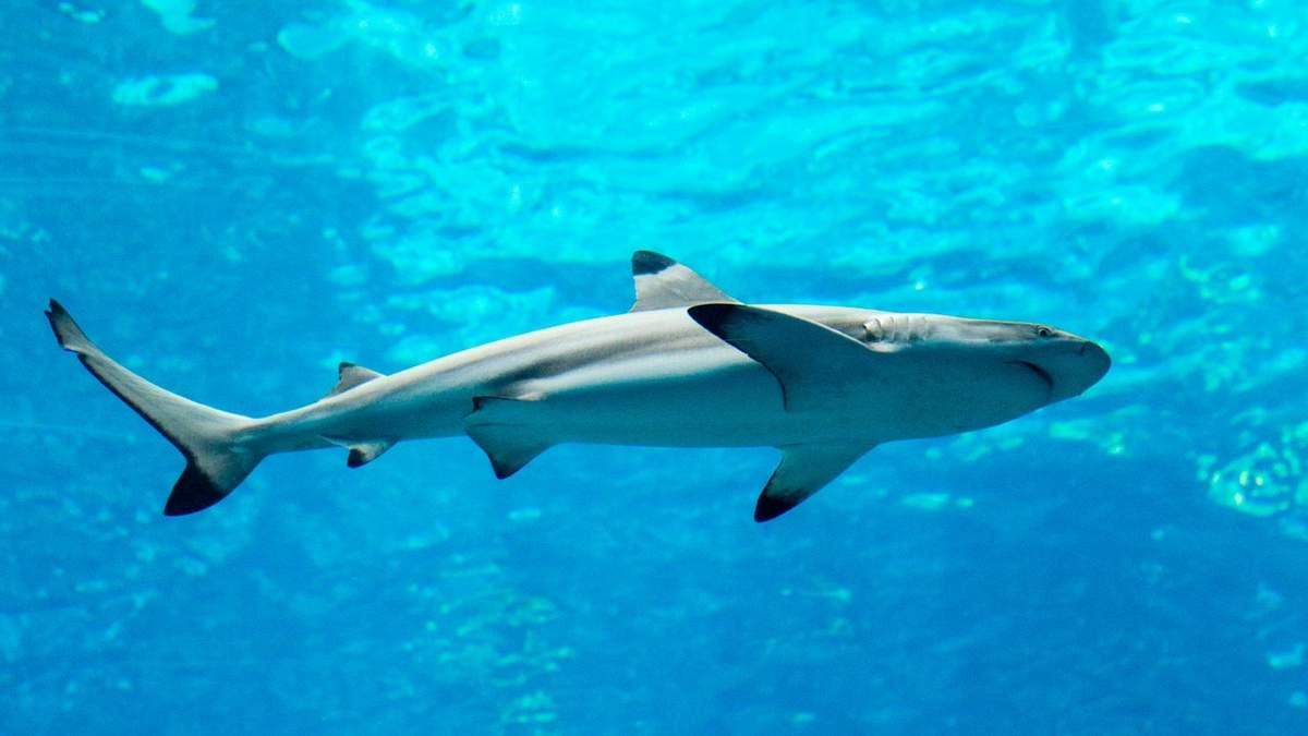 Пойманная в США акула отомстила одному из рыбаков