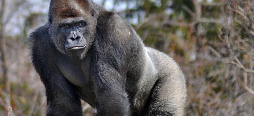 Ведущая сравнила темнокожего коллегу с гориллой в прямом эфире