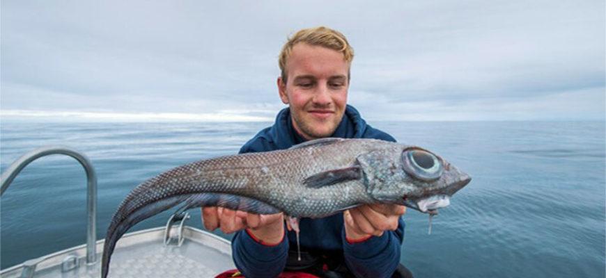 У берегов Норвегии поймали рыбу-химеру