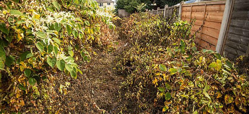 Японское растение захватило дом английской семьи