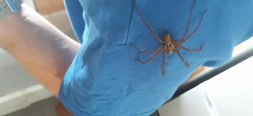 Британцы жалуются на массовое нашествие пауков