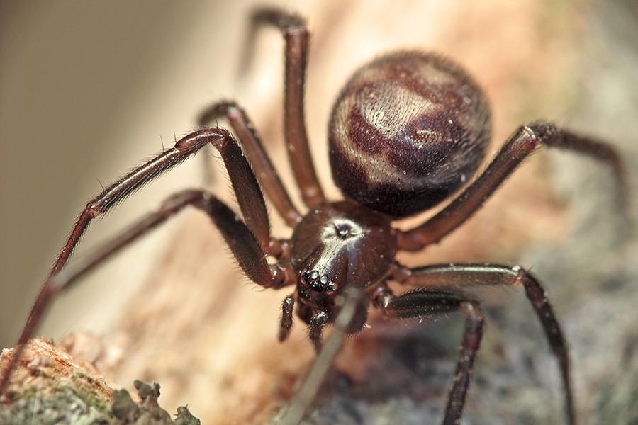 Ядовитый паук укусил женщину и проделал дыру в ее руке