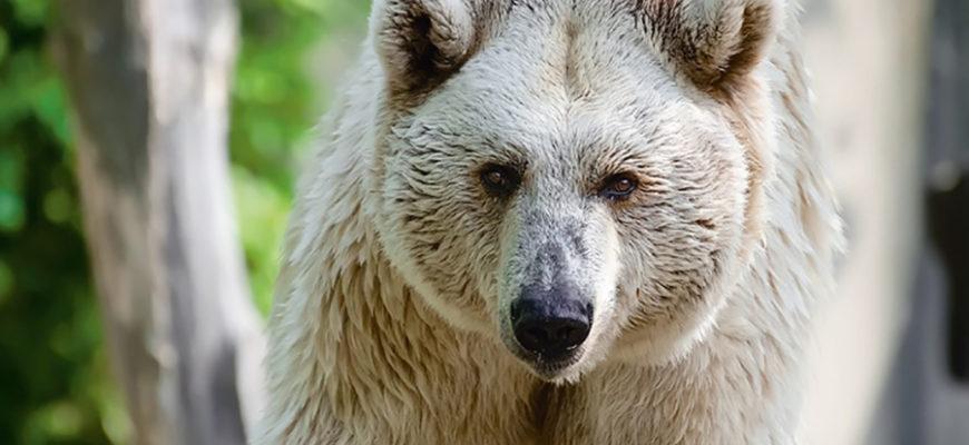 В Армении от нападения медведя погиб польский турист
