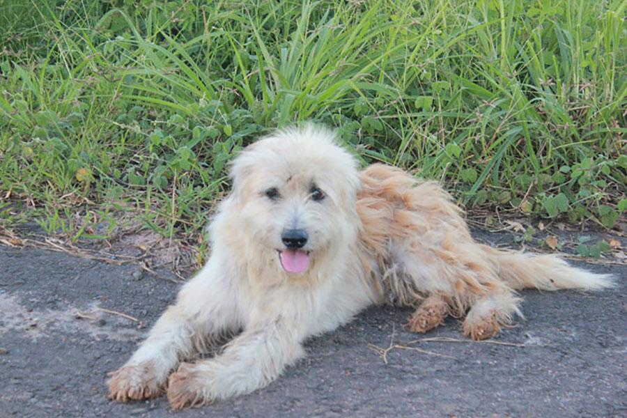 Потерявшаяся собака четыре года ждала у обочины своего хозяина