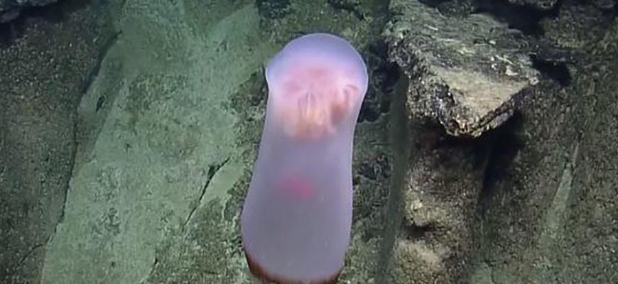 Ученые обнаружили загадочное глубоководное существо
