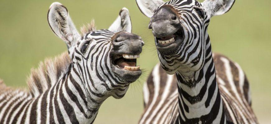 Опубликованы самые смешные фото финалистов конкурса фотографов дикой природы