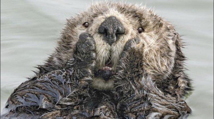 Самые смешные кадры финалистов конкурса фотографов дикой природы