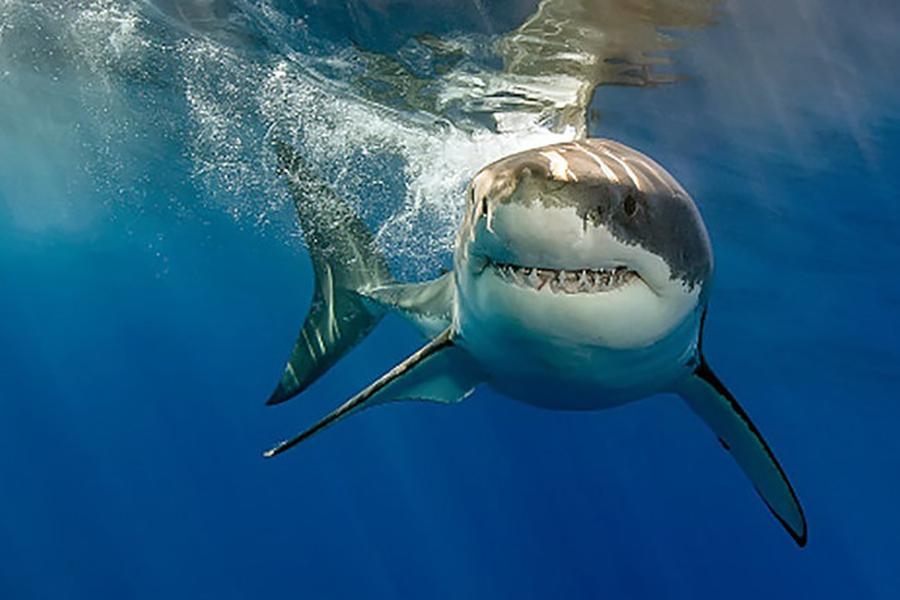 Американец сел в тюрьму за издевательства над акулой