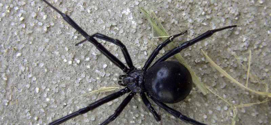 Ядовитые пауки заполонили жилой дом и сильно покусали там людей