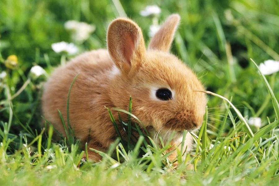 Веганка спасла 16 кролей ценой жизни ста крольчат