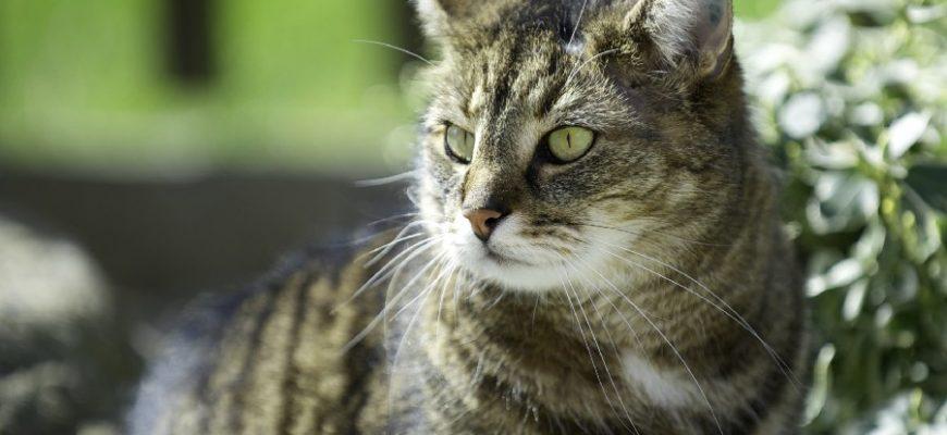 Кошка уберегла всю семью от гибели во время пожара
