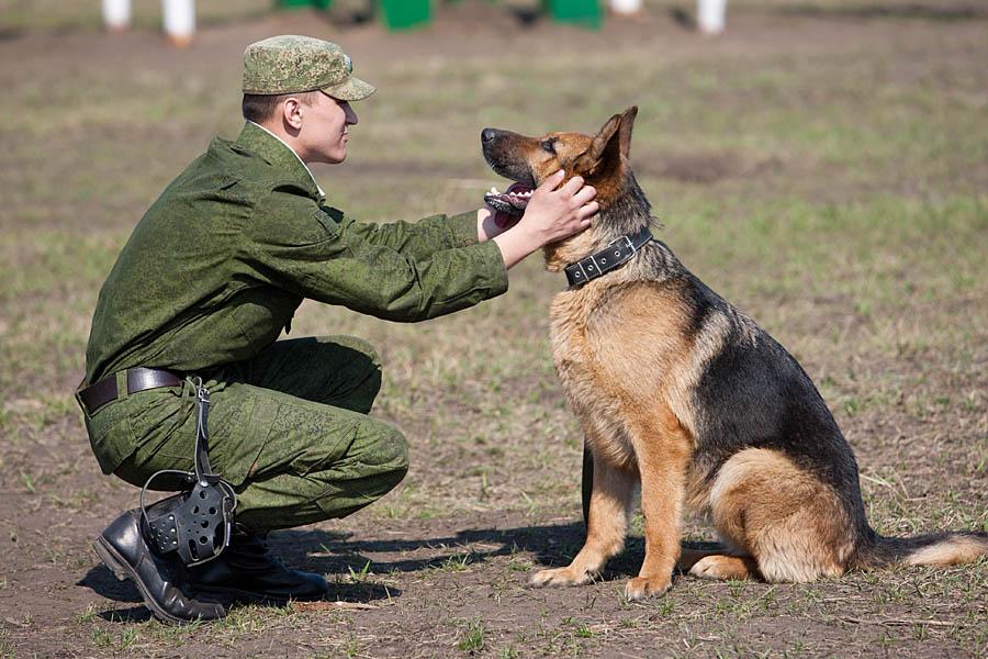 """Собака с помощью соцсетей нашла себе """"работу"""""""