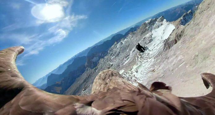 Орел с GoPro пролетел над Альпами, чтобы показать последствия глобального потепления