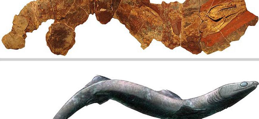 Ученые нашли в Марокко окаменелость древнейшей акулы