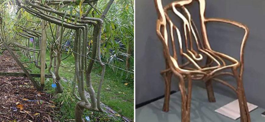 В Великобритании выращивают стулья прямо из земли