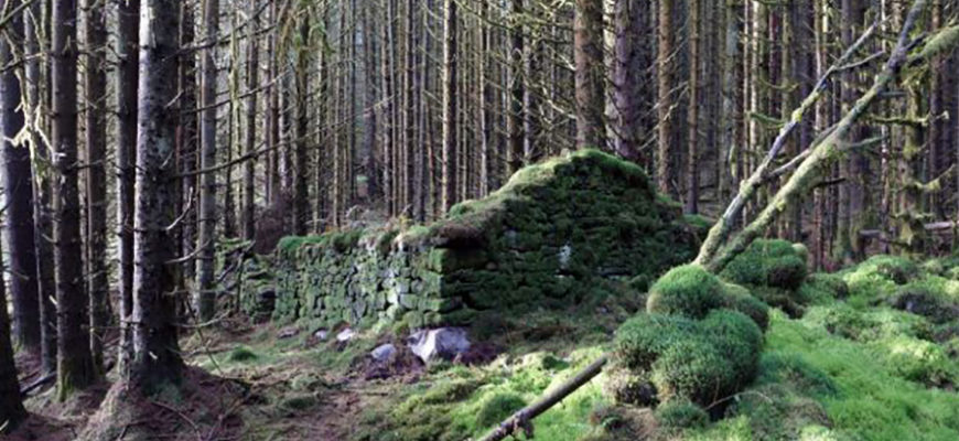 Обнаруженные в Шотландии в глухом лесу древние руины оказались фабрикой «паленого» виски XVIII века