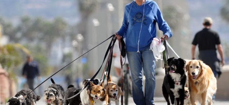 В Австралии вводят штраф $2700, чтобы хозяева выгуливали собак