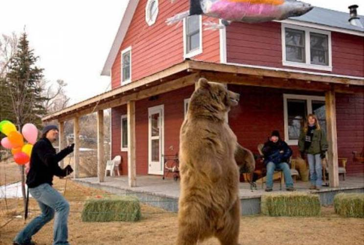 Праздник для медведя