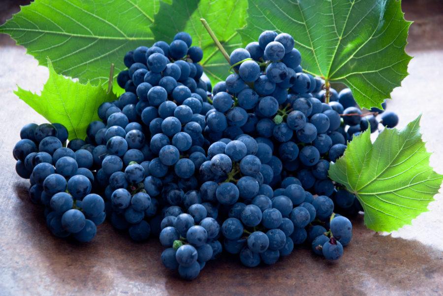 Виноград полезен для лёгких