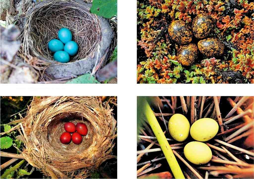 Необыкновенные разноцветные яйца