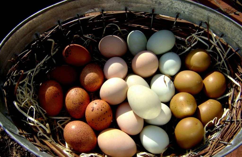 Почему у птиц яйца разных цветов