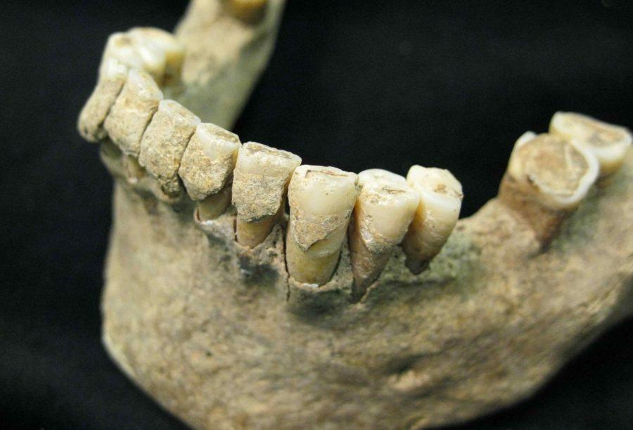 Зубы древнего человека