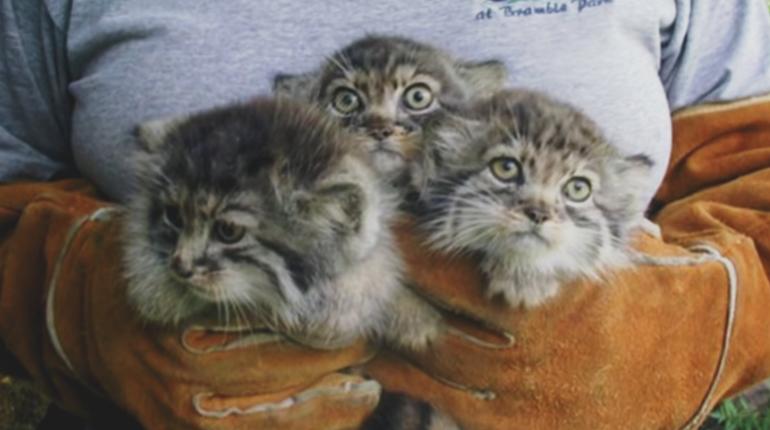 Котята которых нашел фермер