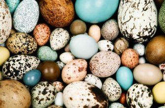 почему у птиц появляются яйца разных цветов