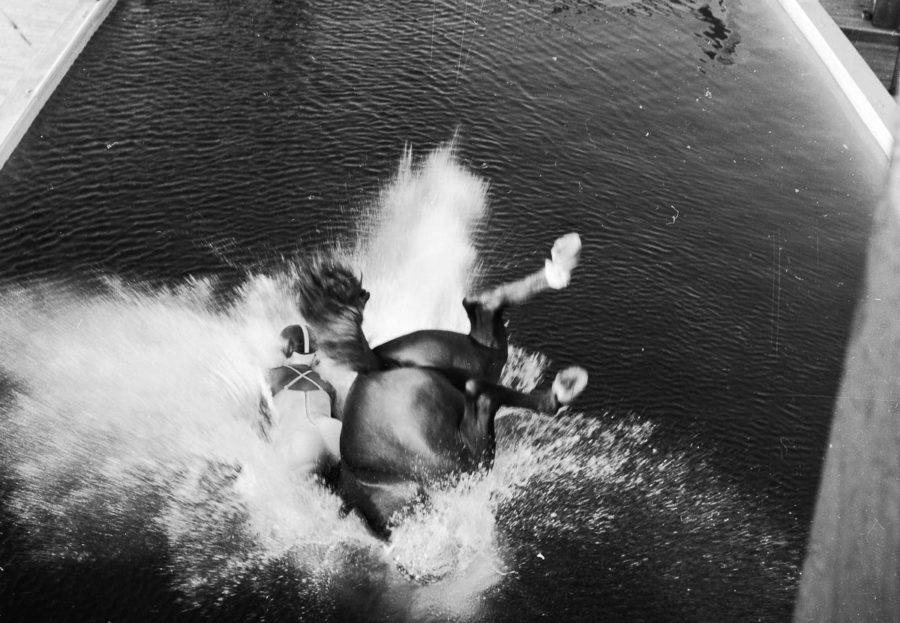 Лошадь прыгнувшая в воду